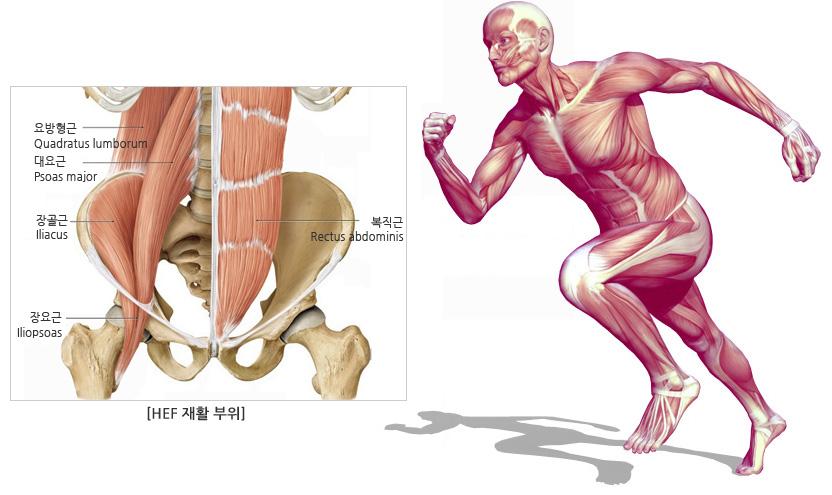 anatomy_09